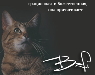 .bafi