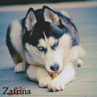 Zafrina