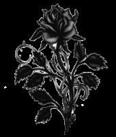 pr-rose
