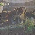 Коты|Npc