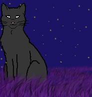 Звезда Ночного Видения