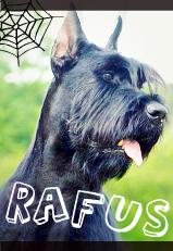 Рафус