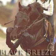 Black Breeze