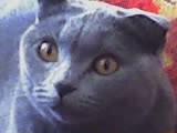 Н@cтён@ real CAT)))