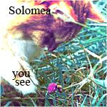 'Solomea
