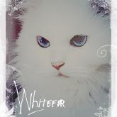 Whitefur