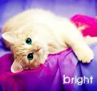Bright;