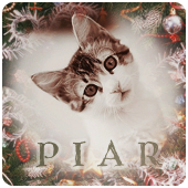 PR-кот