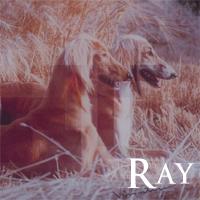 `Ray Ray