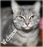 Webpaw