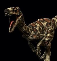 Novaraptor