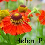 Helen_P
