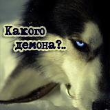 Собаки Аляски