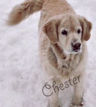Chester.
