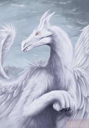 I love dragon (Драгон)