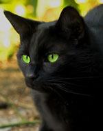 Вопросы по котам воителям