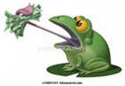 Жаба из Пенджаба