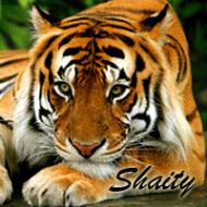 Shaity