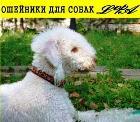 Sergey23