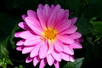 Светик-семицветик