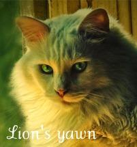 Львиный зев