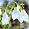 spring_game
