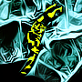 'salamander