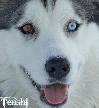 Tenshi