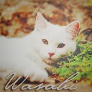 ~Wasabi