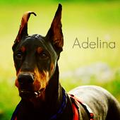 Aделина
