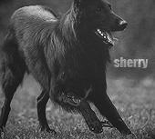 sherry h