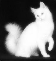 Прозрачная кошка