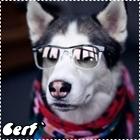 Cerf`