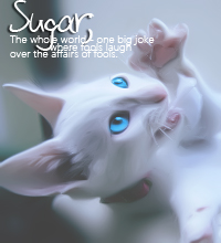 Sugarkit'