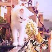 -Feline;