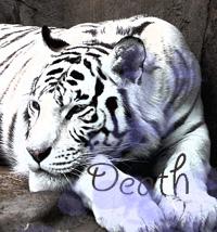 Быстрая Смерть