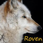 Roven-Amu