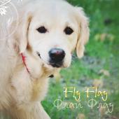 Fly Flay
