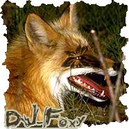 DJ-Foxy
