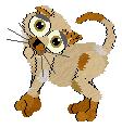 kitten Kesis