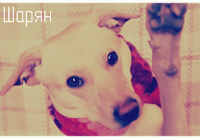 Dogstazy`