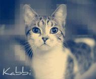 Кабби
