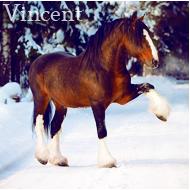 | Vincent |