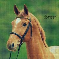 ;brest