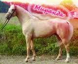 Миранда
