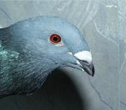 ПтицаЮжная