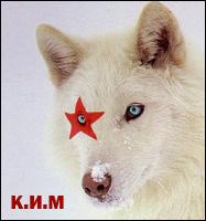 К.И.М[X]