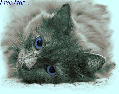Вольная Звезда