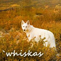 `whiskas