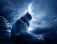Охотница - Ночка